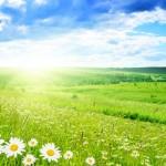 På min mark er der solskin